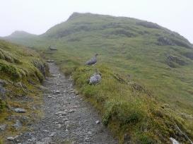 Ptarmigan, Tarmachan ridge