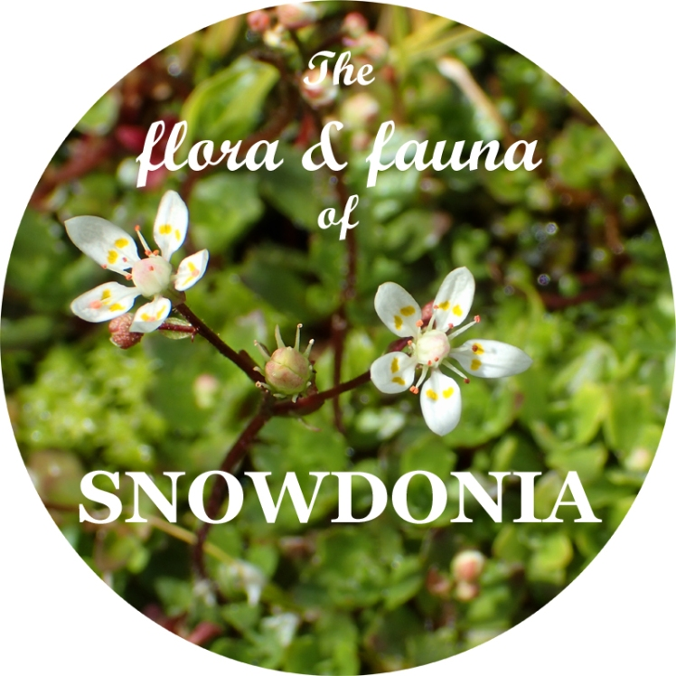 flora fauna 800px