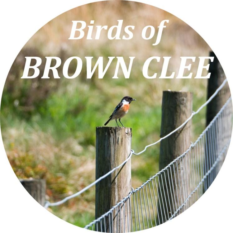 birdsbrownclee-800px
